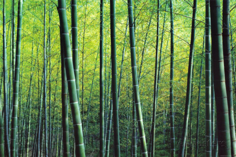 robert-churchill-the-bamboo-grove